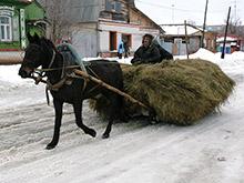Минтранс РФ обяжет водителей гужевого транспорта получать права и номера
